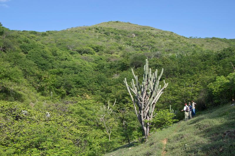 Image result for Monte espinoso (Chaparral Espinoso) Guatemala